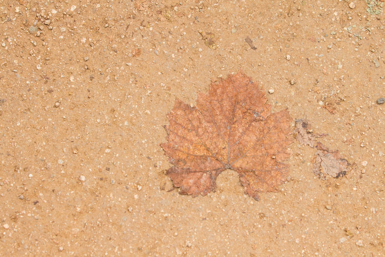 Blank Space Close-up Copy Space Copyspace Day High Angle View Leaf Low Contrast Music Nature No People Outdoors Sand Textured  Vein Veins In Leaves