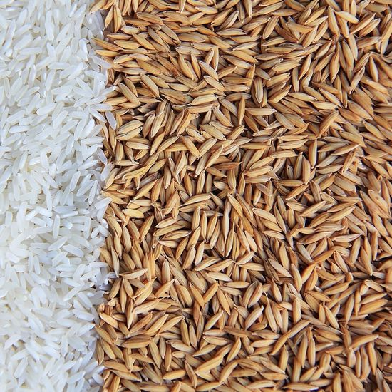 Directly above shot of wheat and rice