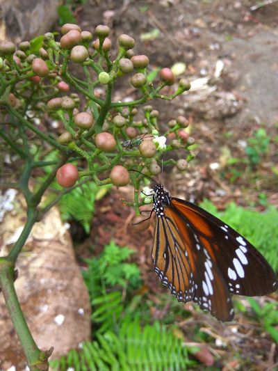 Butterfly - Insect Insect Nature Animals In The Wild One Animal Animal Wildlife Beauty In Nature