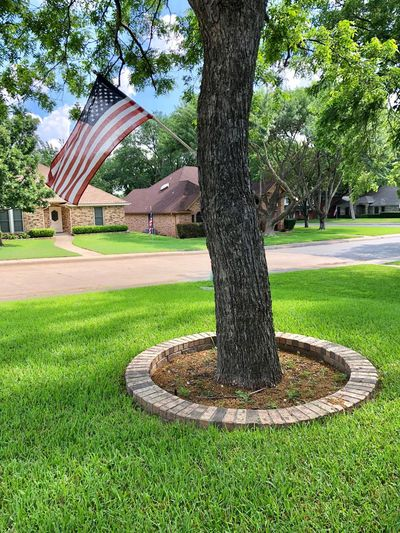 American Flag Flag Plant Tree Grass Park Green Color Nature Growth Day Tree Trunk Sunlight Outdoors Beauty In Nature