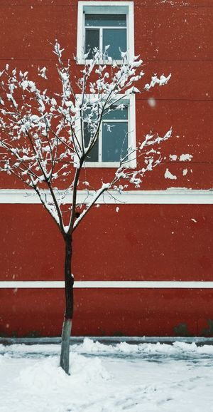 Life Colors Mood Afternoon Quiet Tree Snow Winter Window Architecture Close-up Building Exterior Built Structure