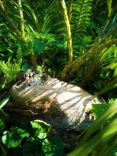 Leaflet Log Tree Water Forest Fern Shadow Green Color Plant Palm Leaf Date Palm Tree Lush - Description Pine Woodland