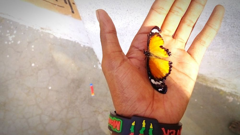 Human Hand Outdoors Nature Butterfly Monarch Butterfly Yello Orange Natural Beauty