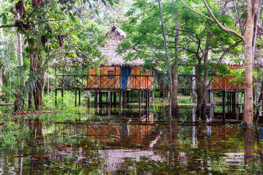 Bungalows deep in the Amazon Rainforest near Iquitos, Peru Adventure Amazon Amazonas Amazonia Bungalows Forest Green Hut Iquitos  Iquitos, Perú Jungle Lake Lodge Nature Outdoors Park Peru Rainforest Reflection River South America Tranquility Tree Tropical Vacation