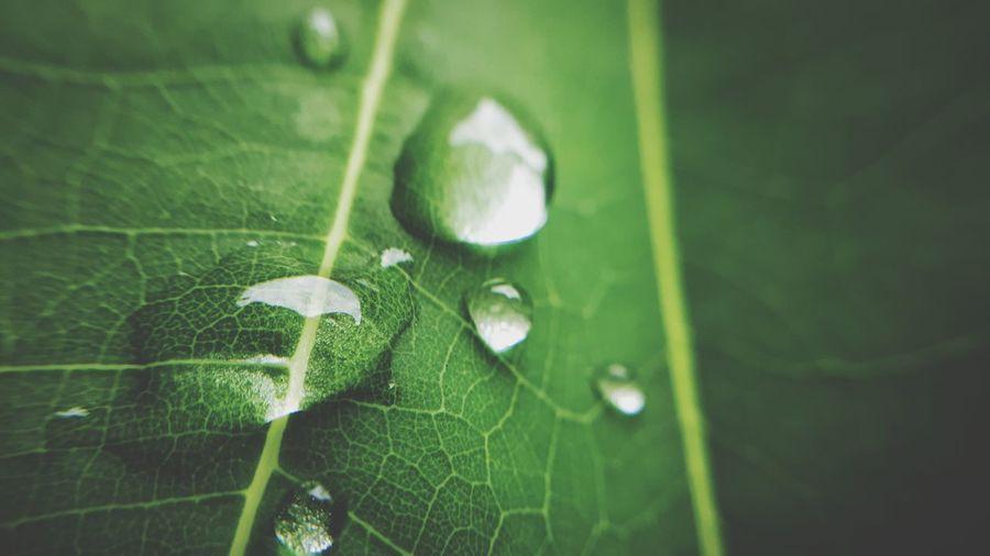 Chlorophyll...