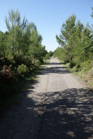 Beauty In Nature Bike Castellón Clear Sky Cycling Day Grass Green Way Growth Landscape Nature Nature No People Outdoors Plant Road Scenics Shadow SPAIN Sunlight The Way Forward Tranquil Scene Tranquility Tree València