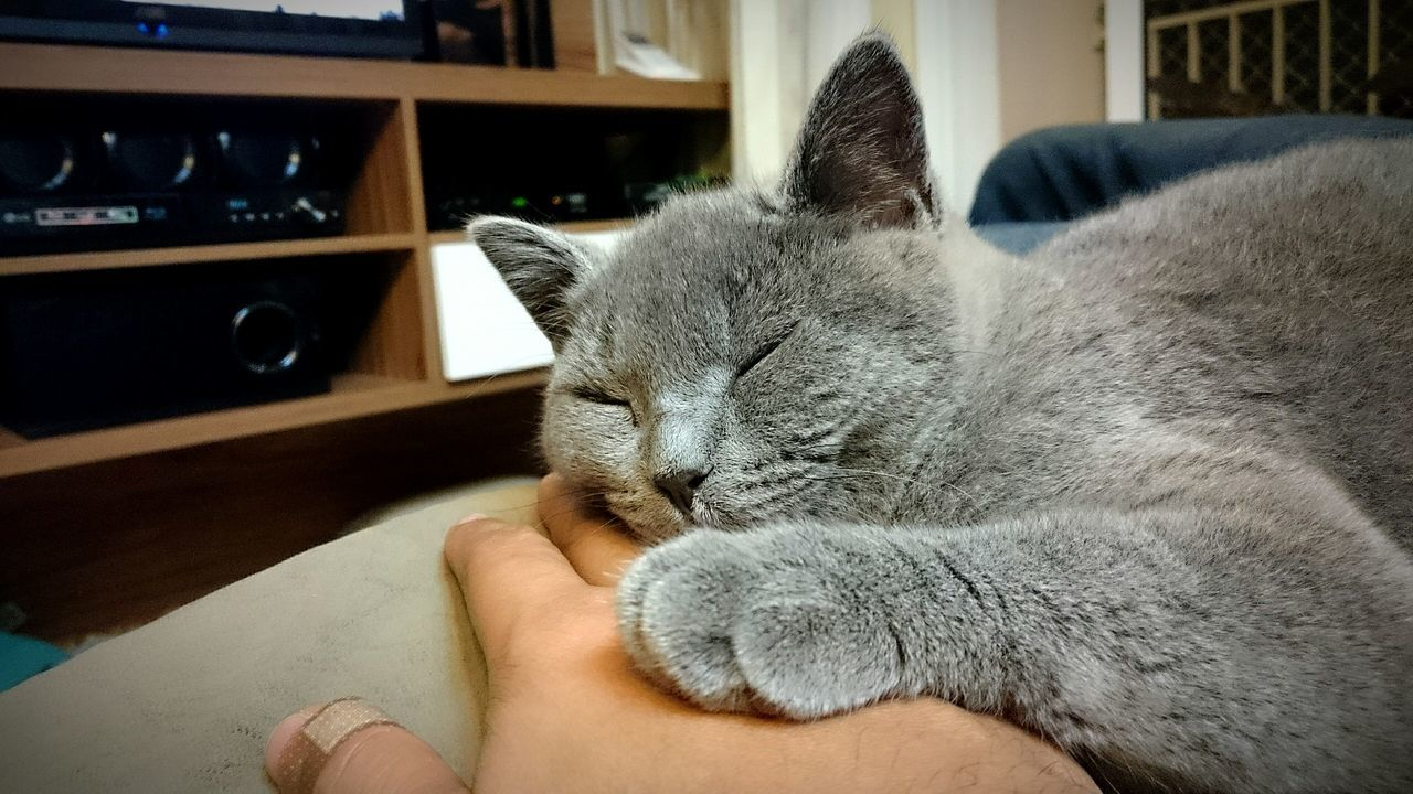 Close-Up Of Hand Feeding Cat Relaxing At Home