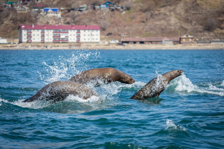 View of seal swimming in sea
