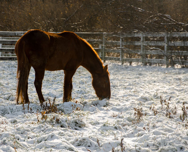 Horse Life Horses Animal Themes Beauty In Nature Cold Temperature Day Domestic Animals Horizon Over Water Horse Livestock Mammal Nature No People One Animal Outdoors Snow Winter