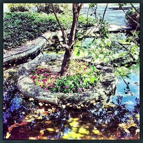 Relaxing Eyemlover EyeEm Nature Lover Beauty Green Flowers Enjoy Life Suprise Secret Garden Garden