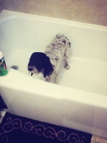 My baby Bella getting a bath (: