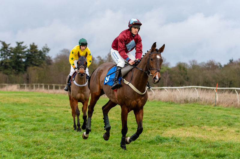 Horses cantering to the start of the race at the Ampton Point to Point races. Point To Point Racing Point To Point Point To Pointing Horse Racing Horse Racing Course Horseback Riding Domestic Animals Horse Jockey Sport Horse Photography  Horses Cantering