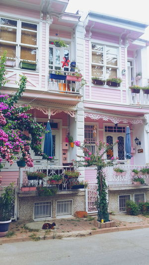 Outdoors Day Pretty Flowers Home Home Design Istanbul Turkey Cats Built Structure Building Exterior Day Store Outdoors Flower No People Multi Colored City Turkey Istanbul Home Flowers Pretty Architecture Cats Home Design First Eyeem Photo