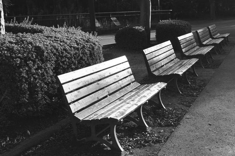 Chair Wood WoodChair Bench Autumn