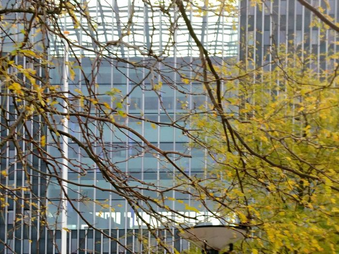 Low angle view of bare trees against buildings