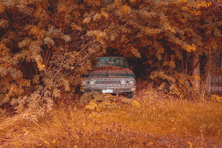 Rusty, abandoned car between bushes somewhere in utah