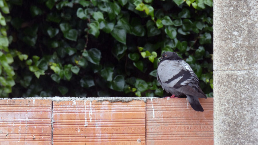 View of pigeon perching on wall