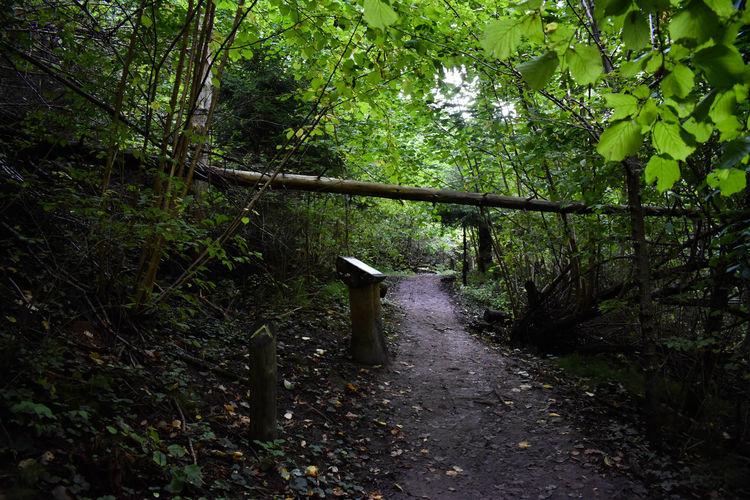 Path Beauty In