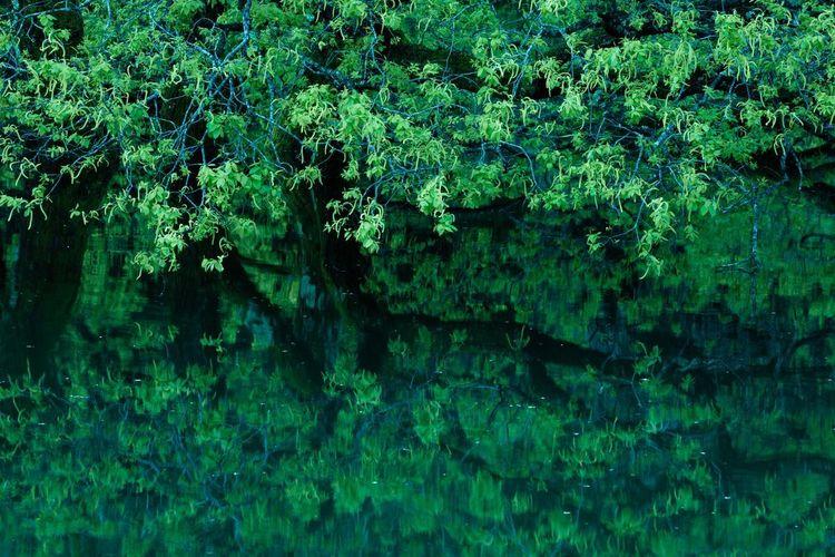 新緑レフレクション Japan Photography Japan Fresh Green Nara Murou Lake Lake Tree Water Backgrounds Full Frame Leaf Lush Foliage Reflection Close-up Green Color Lakeside