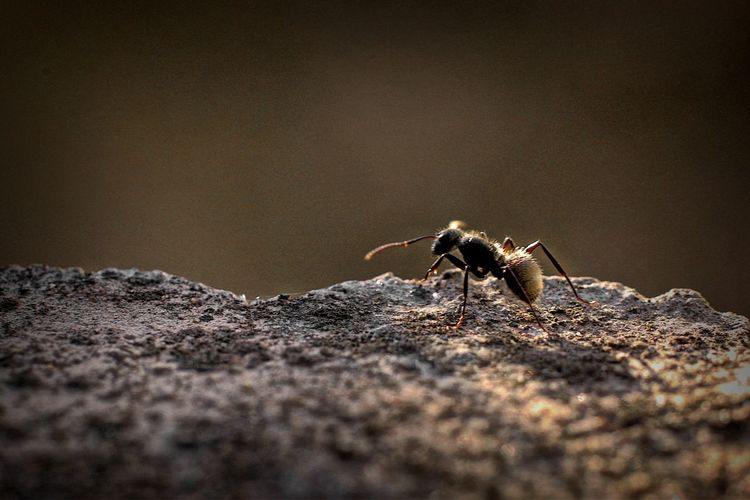 Close-up side view of ant against blurred background