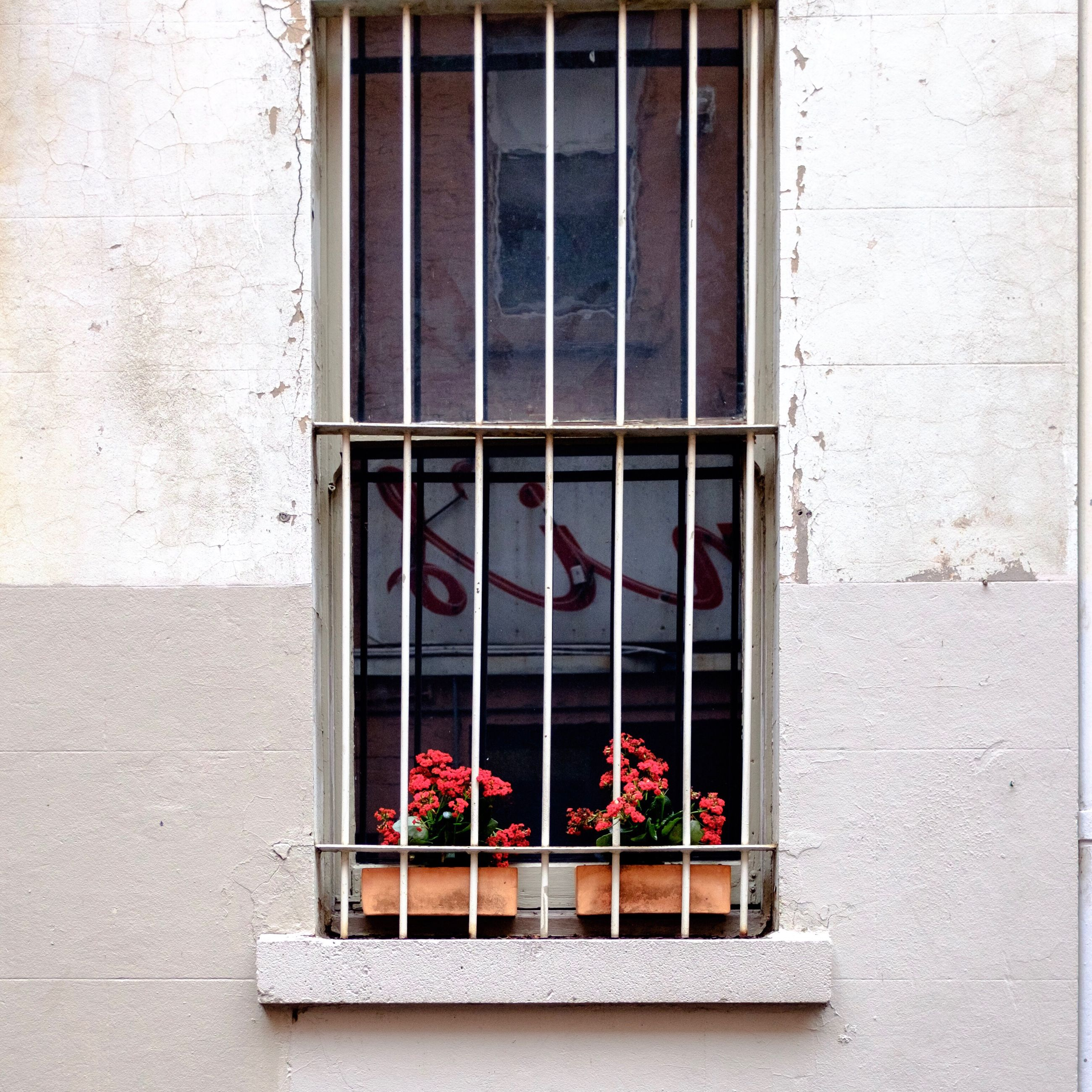 window, flower, growth, potted plant, plant, building exterior, freshness, window sill, flower pot, architecture, day, pink color, fragility, outdoors, nature, geometric shape, in bloom, no people, arrangement
