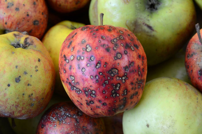 Apples Blemished Fruit Pockmarked Red And Green