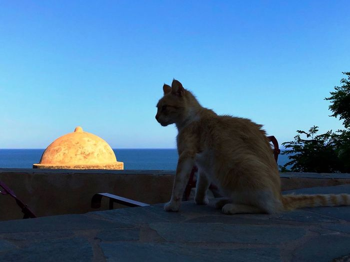 Cat and dome