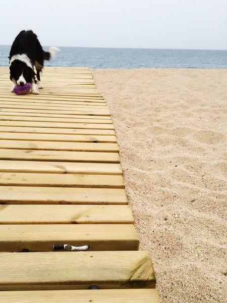 Being A Beach Bum Sandcastles Sunshine Sea Enjoying The Sun Taking Photos Enjoying Life Barcelona Arenys De Mar My Dogs Are Cooler Than Your Kids