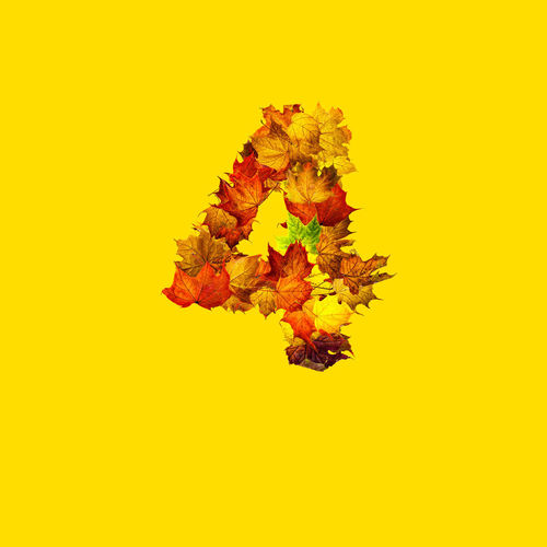 Close-up of autumn leaves against yellow background