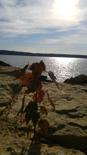 Rocks Close-up Tranquil Scene Scenics Horizon Over Water Sun Glistening On Water Sun Glistening Lake Lake Monroe Lake Monroe, Indiana Glimmering Water Glimmering Lakescape Lakeside Sunshine Sun Cloud - Sky Water Sky Nature Autumn Autumn Colors Fall Beauty Autumn Leaves Fall Colors