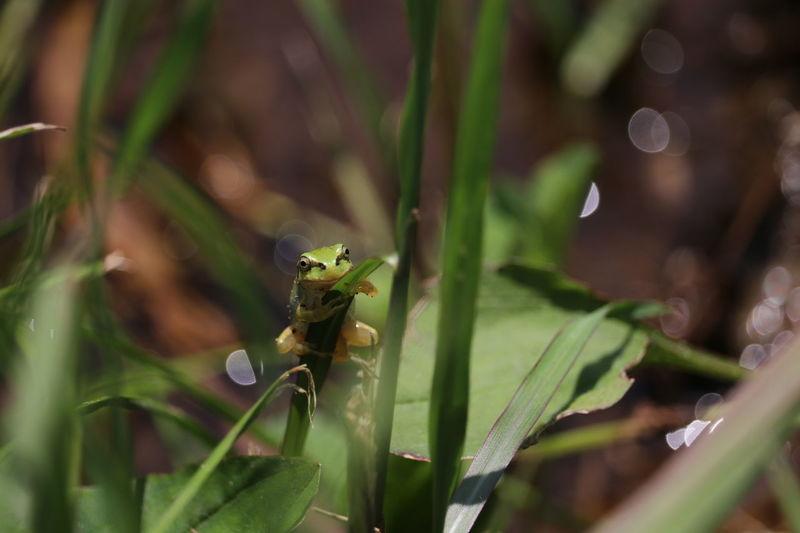 ちっちゃくスマイル🐸🐸 EyeEm Nature Lover EyeEm Gallery Nature Nature Photography キラキラ Eyeem Photography Beauty In Nature Noedit Nofilter EyeEm おはよう☔っぽい1枚着込んで行こかな😁