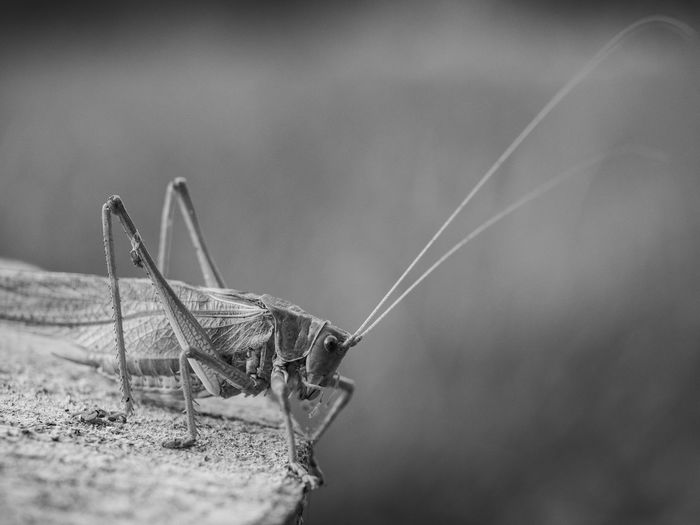 Close-Up Of Grasshopper On Wood