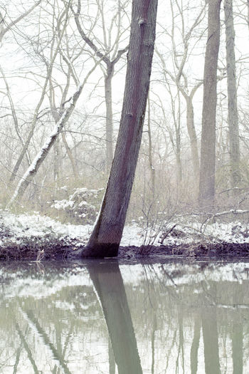 Tree River Snow Winter Forest Woods New Jersey South River Old Bridge Duhernal Reflections In The Water Tranquil Scene Fog Perspectives On Nature Shades Of Winter