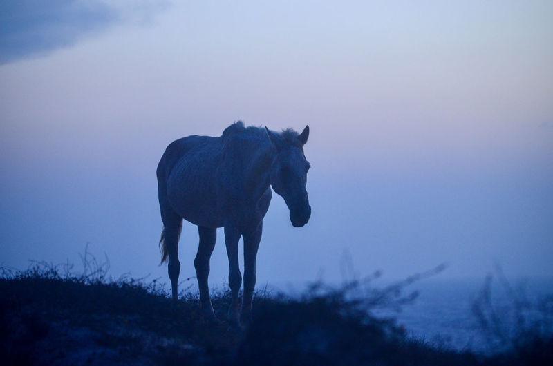Horse standing on field against purple sky
