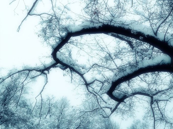 'Branching Out' #WinterHasCome #Winter #StayingIndoors #LookingOut Nature