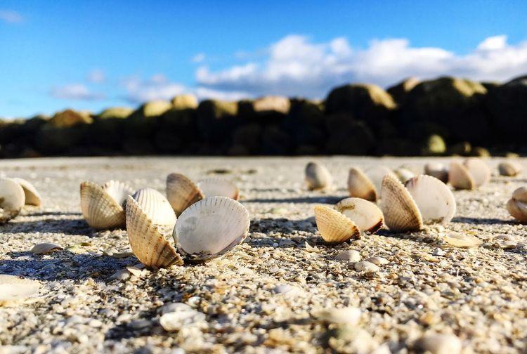 Seashells On Sand At Beach