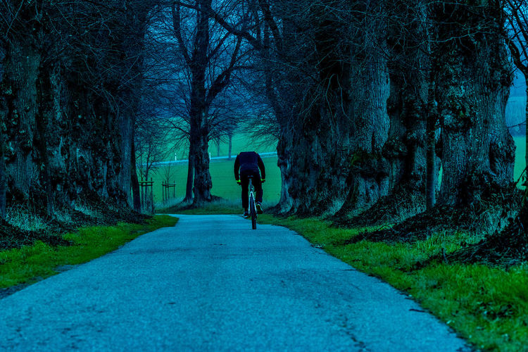 biker Tree Direction The Way Forward Full Length Plant One Person Real People Rear View Road Nature Transportation Lifestyles Leisure Activity Walking Day Men Trunk Tree Trunk Solitude Outdoors Diminishing Perspective