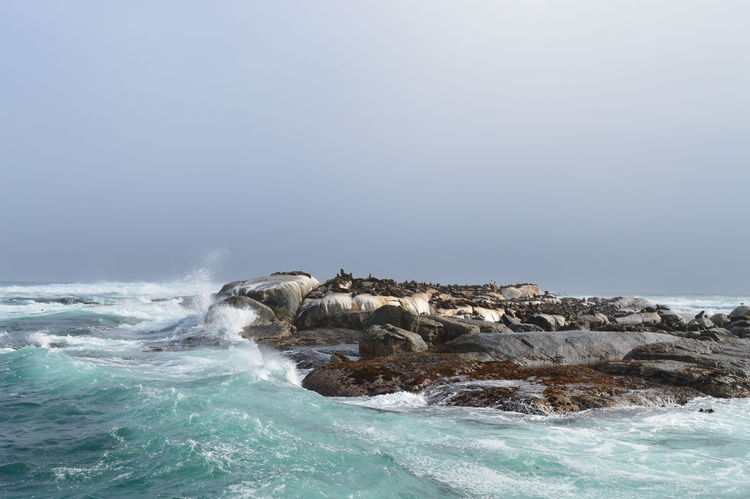 Seal and Seal Island Cape Town Day Duiker Island Fish Hout Bay Island Nature Nature No People Outdoors Sea Sea And Sky Sea Beach Sand Water Seal Sealife Sealovers
