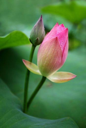 Garden Flowers 🌷 Flowers 🌹 Mysity