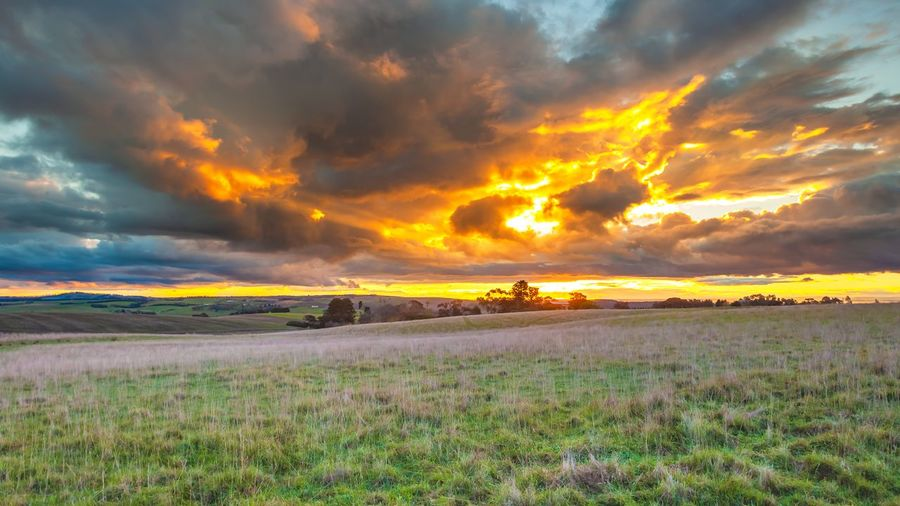 Sunset over a meadow PastureLand Beauty In Nature Cloud - Sky Countryside Dramatic Sky Environment Field Geelong Grass Grassland Idyllic Land Landscape Meadow Nature No People Non-urban Scene Orange Color Outdoors Plant Scenics - Nature Sky Sunset Tranquil Scene Tranquility