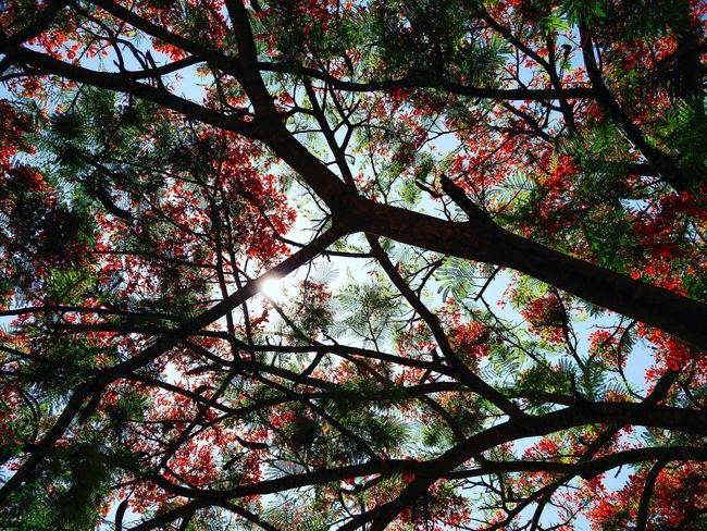 Nature creates the best abstract art. Tree Nature Beauty In Nature Branch Day Outdoors Sky Sunny Green Red Sun Forest Photography Colorsofnature India Kerela Munnar Abstract Abstractart Abstract Photography