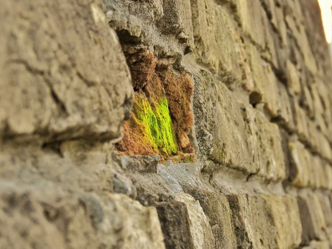 Wall - Building Feature Brick Wall Selective Focus Backgrounds Full Frame Growth Nature Outdoors Green Color Growing Tranquility Green No People