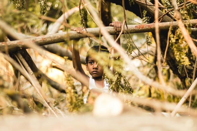 Boy Hanging On Bamboo Amidst Trees