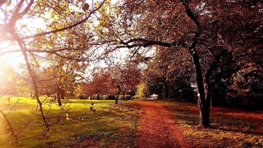 Autumn Autumn colors Autmn Landscape Autmnsunshine Tree Branch Sky Grass Tranquil Scene Countryside Scenics Tranquility Orange Color Idyllic