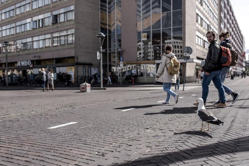 Bird Bird Photography Birds Crossing The Street Leiden Looking At Camera Men And Animal Sea Gull Street Photography Urban Walking The Street Photographer - 2017 EyeEm Awards The Photojournalist - 2017 EyeEm Awards