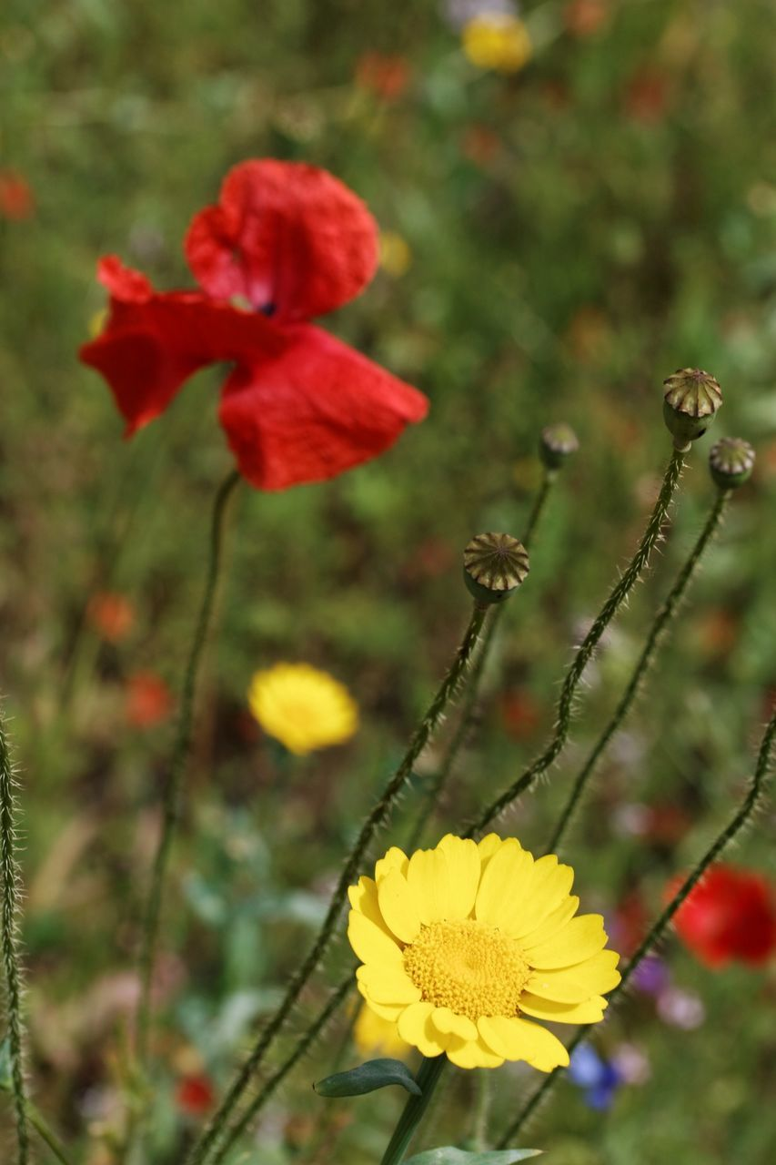Close-Up Of Red And Yellow Flowers Blooming In Forest