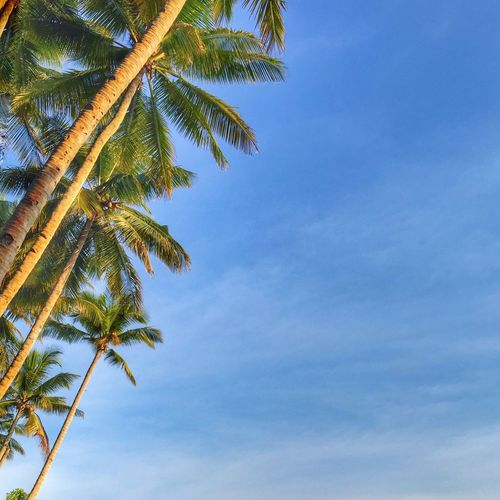 🌴💚💙 . . . Tree Sky Outdoors Palm Tree Low Angle View Growth Beauty In Nature Scenics No People Tranquil Scene Day Island In The Sun Island Island Life Summer Beachphotography Beach First Eyeem Photo