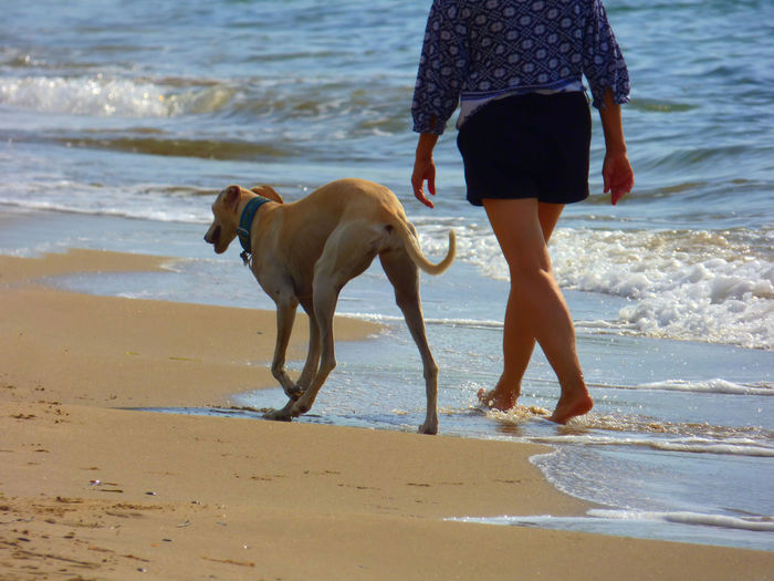 Low section of woman walking with greyhound on shore at beach