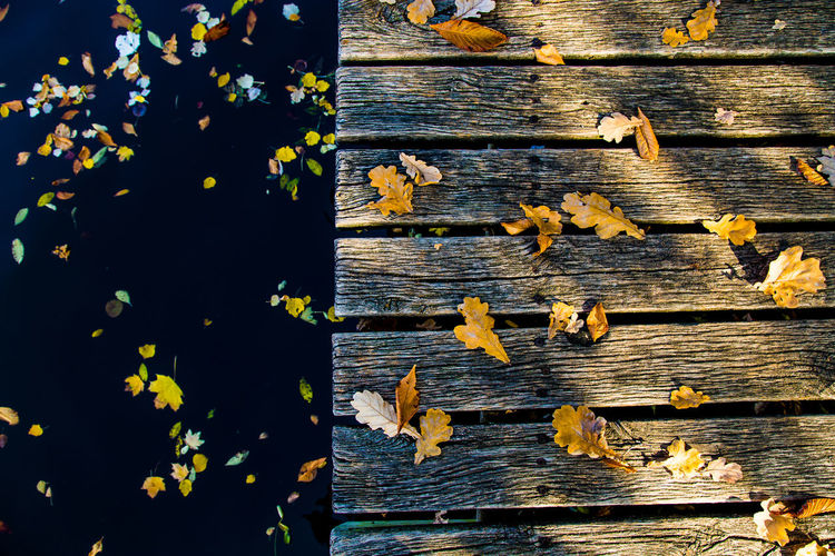 High angle view of yellow flowering leaves on wooden table