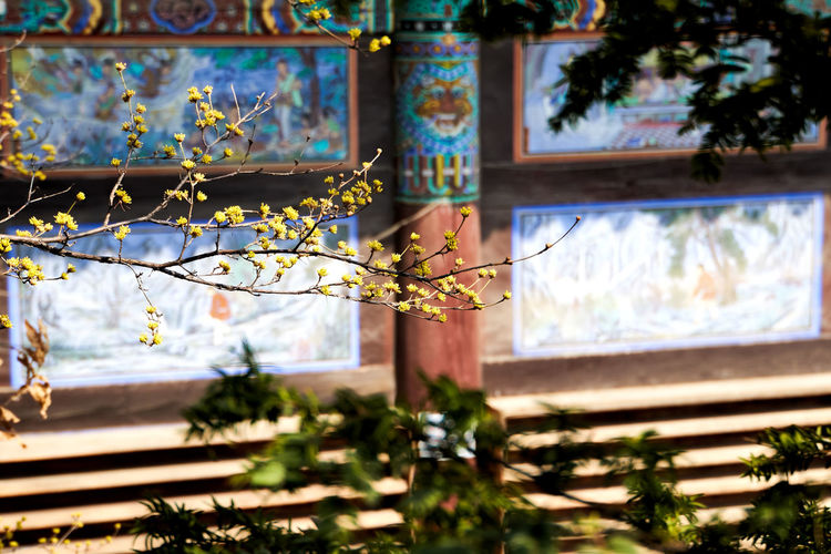 Beauty In Nature Buddhism Buddhism Temple Cornus Cornus Fruit Flower Focus On Foreground Growth Outdoors Plant